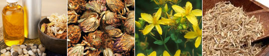 Herbs From India : Ayurvedic Herbs,Raw Herbs,Essential Oils